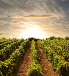 Visit tastings at Niagara vineyards and wineries with a Couples Experience Package.